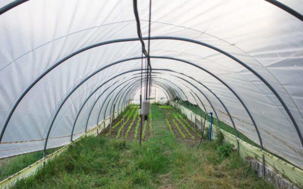 serra dove avviene la coltivazione
