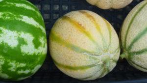 meloni e angurie in cassetta