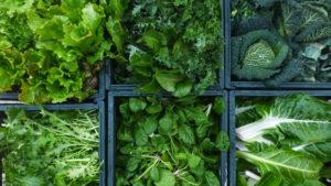 verdure e ortaggi di stagione freschi appena raccolti